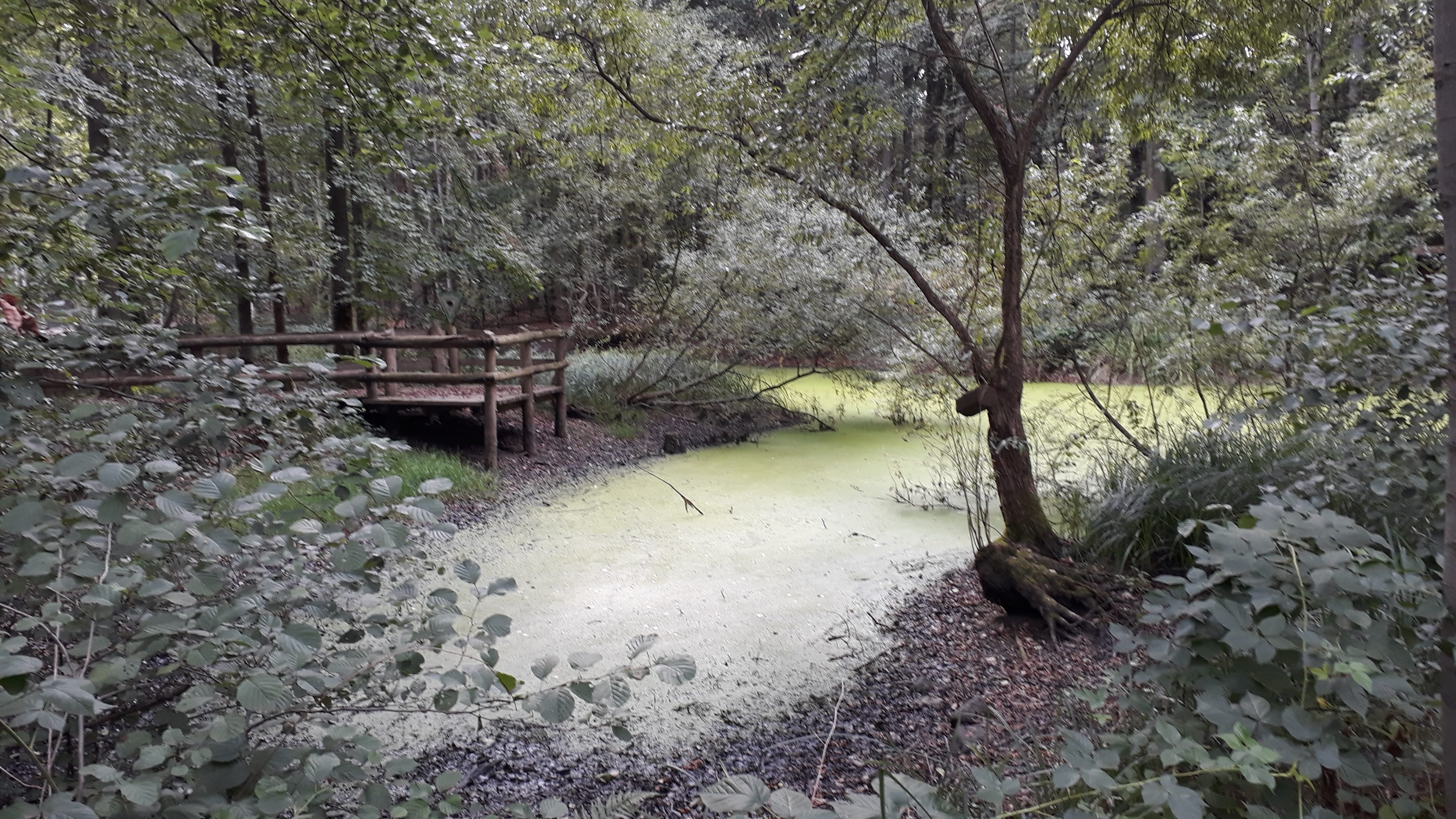 Ein Kleinod Im Niedermittlauer Wald