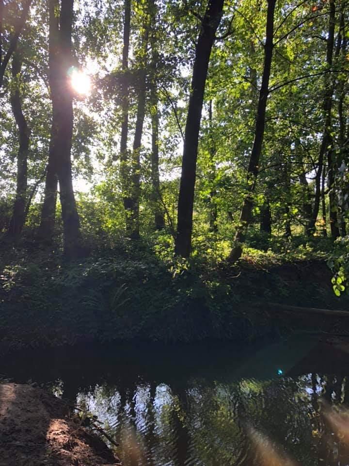 Unterwegs Im Meddeler Wald…